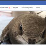 www.facebook.com/FalciotApusapus/