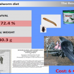 Mealworm Diet – Results